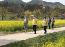 [예천]회룡포 유채꽃 물결로 관광객 몰려, 농가소득도 올려!